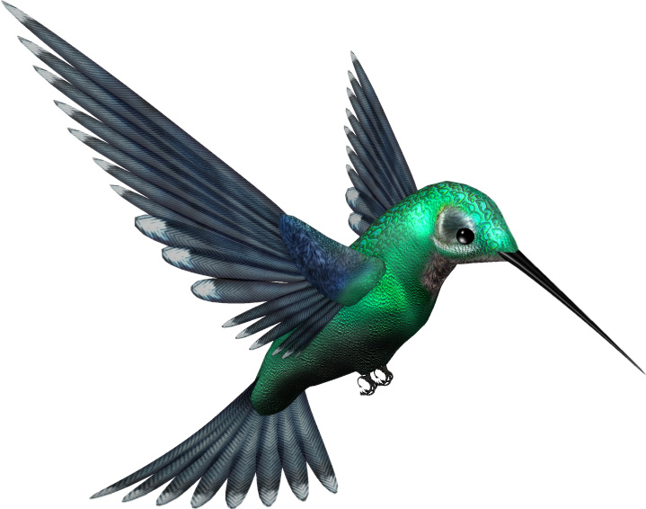 Green-Humming-Bird