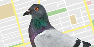 "Google ""Pigeon"" Update Boosts Local Directories Specifically Yelp"