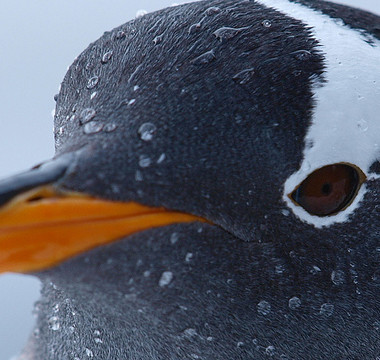Penguin 3.0: A Refresh Impacting 1% of English Queries